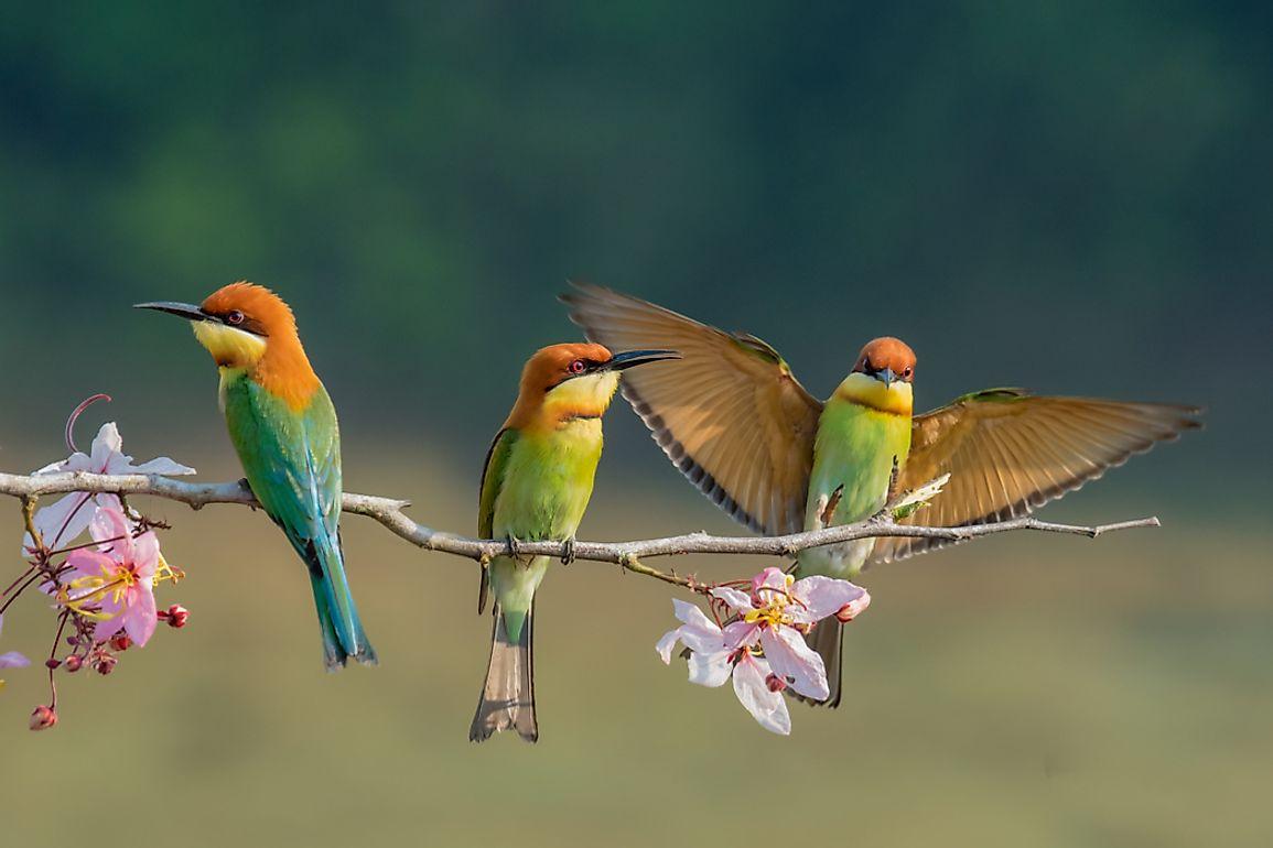 Download Birds Pink Wallpaper 1280x1024   Wallpoper #360783