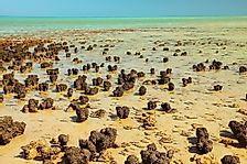 Shark Bay: A UNESCO World Heritage Site In Australia