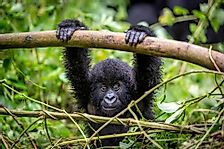 What Kind of Animals Live in Rwanda?