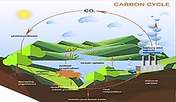 What Is The Carbon Cycle?