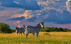 The Wild And Magnificent National Parks Of Botswana