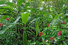 Threatened Endemic Plants Of Costa Rica