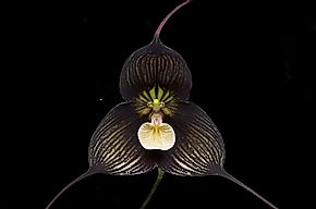 Native Plants Of Ecuador
