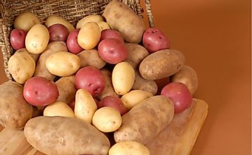 The Top 10 Potato Producing States In The US