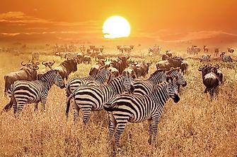 10 Interesting Facts About The Serengeti