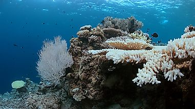 How Serious Is The Problem Of Coral Bleaching?