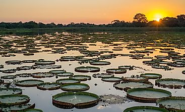 Where Is the Pantanal Natural Region Located?