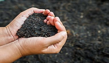 Why Is International Soil Day Celebrated?