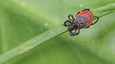 Where Do Ticks Live?