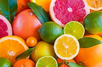 The World's Top Citrus Producing Countries