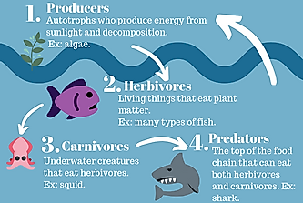 What is the Marine Food Chain?