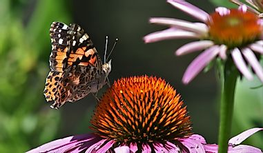 Why Are Butterflies Important To The Ecosystem?