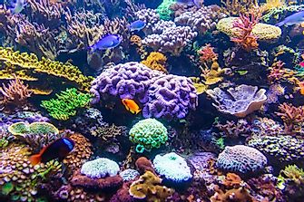 The Coral Reefs Are Suffering: 5 Causes To Their Destruction