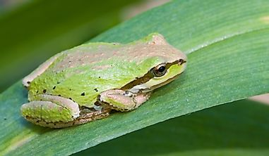 What Is The Washington State Amphibian?