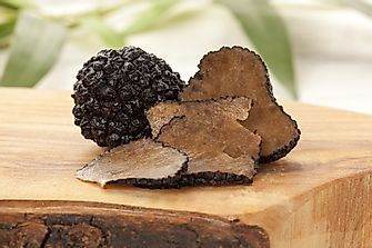 The World's Top Producers of Mushroom and Truffle