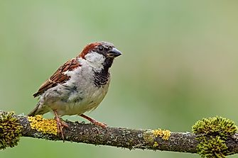 How World Sparrow Day Is Leading the Fight for Urban Wildlife