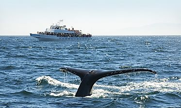 Top Whale-Watching Destinations In The World