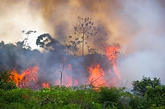 Can A Rainforest Catch Fire?