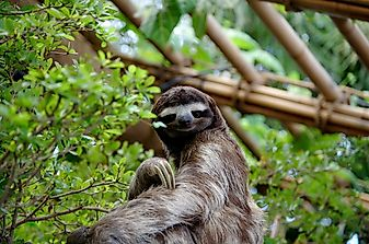 Why Are Sloths Slow?