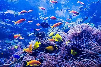 Top 7 Facts About The Great Barrier Reef