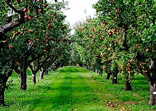 Was Johnny Appleseed a Real Person?