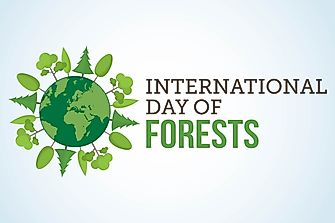 When and Why is International Day of Forests Celebrated?