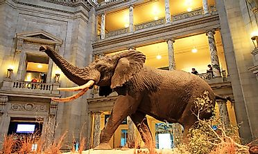 Exploring The Wonders Of The World: Smithsonian Museums, Galleries, And Zoo