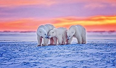 Who Are The Arctic Big Five?