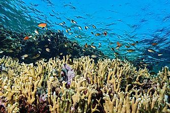 What Are The Biggest Threats To Coral Reefs Across The World?