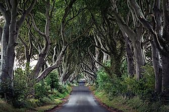 Dark Hedges, Northern Ireland - Unique Places Around The World