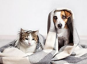 Best Ways To Care For Pets During The Coronavirus