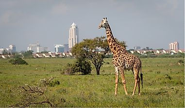 Which Is The Oldest National Park In Kenya?