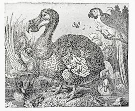 How Did the Dodo Bird Go Extinct?