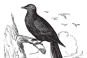 What Happened to the Passenger Pigeon?