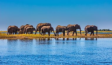 10 Interesting And Unique Facts About Botswana