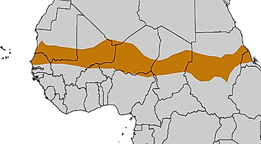 Where is the Sahel Region of Africa?