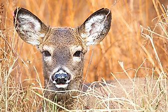 What Is Zombie Deer Disease And How Dangerous Is It?
