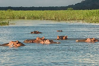 Where Do Hippos Live?