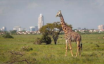 What Is Special About Kenya's Nairobi National Park?