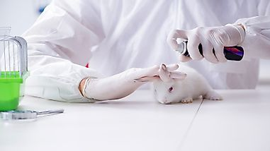 The Three Rs Of Animal Testing: A More Humane Approach To Animal Experimentation