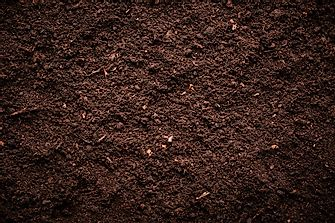 What Does Soil Consist Of?