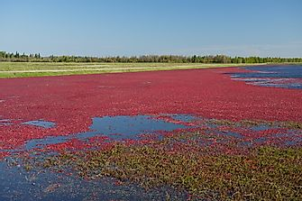 10 Top Countries in Cranberry Production