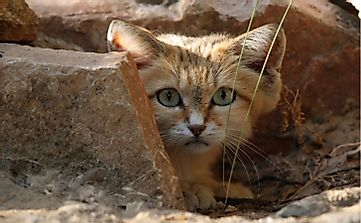 10 Animals Found In Jordan