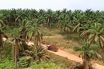 Where Are Indonesia's Palm Oil Plantations Located?