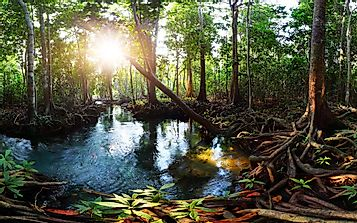 What Is A Peat Swamp Forest?