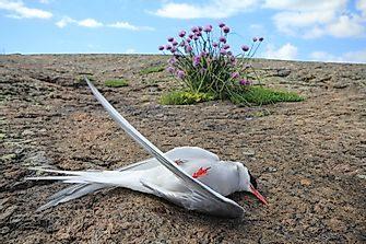 5 Unexplained Mass Bird Deaths
