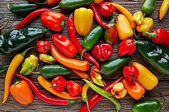 The Hottest Peppers in the World
