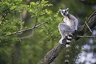 What Is Madagascar Most Famous For?