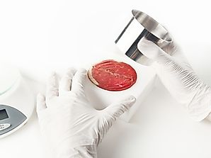 What is In Vitro Meat?