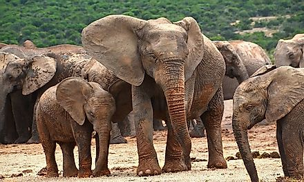 Elephants are highly social and intelligent animals and must be protected from the ill effects of human activities.